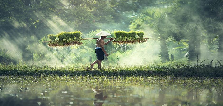 Farmers Work Visa for Malaysia | Malaysia Work Permit | joborganic